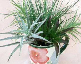 Garden Butterflies Mug airplant arrangement