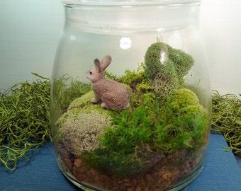 Fern Terrarium No 8 Rabbits Foot Fern By Mossterrariums On