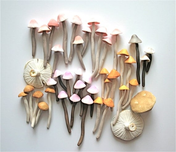 Candy Sweet Colorful Wild Mushrooms / A Collection of 42 Freshly Harvested Candy Mushrooms