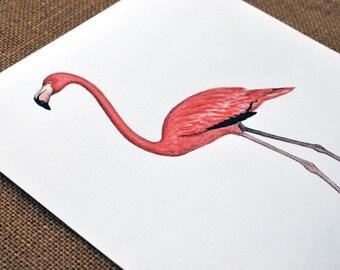 Pink Flamingo 8X10 Fine Art Print