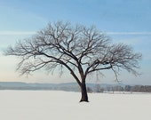 Lone Elm Tree Winter Snow Landscape Wall Art Home Decor Fine Art Photography