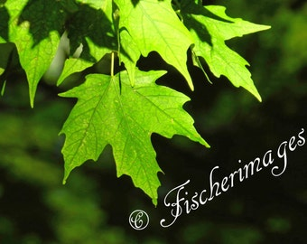 Nature Green Leaves Sunshine Wall Art Home Decor Photo Print Fine Art Photography