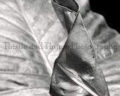 Philodendron Leaf Photographic Print - 5x7 Photographic Art Print
