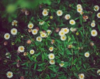 Wildflowers - 8x10 Fine Art Photograph