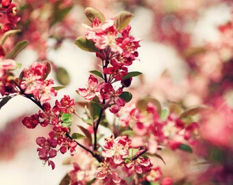 Flower Photography - Cherry Tree - Spring - Red - Flowers