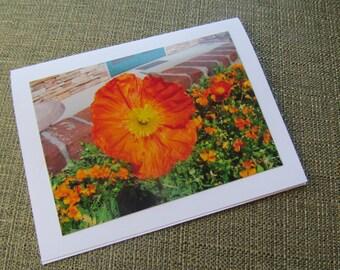 Orange Flower Photo card, blank inside, flowers CLEARANCE