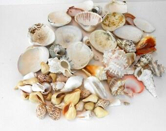 seashells bridal beach wedding shells 64 natural shells sea shell supplies craft home decor bridal wedding nautical beach wedding