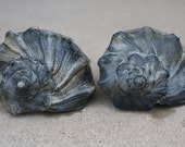 SALE Set of 2 Blue Gray Whelk Conch Sea Shell Atlantic Ocean Authentic Beach 2310