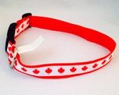 Red Maple Leaf Dog Collar reserved for JJ