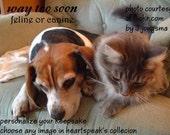tragic sudden death...way too soon ( a spirit's song )tragic sudden death /canine or feline /sentimental cards/condolence cards