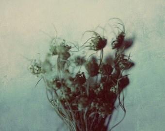 botanical print, winter decor, blue decor, dark art, nature art print, grey decor, still life, fine art print, dried flower,queen annes lace