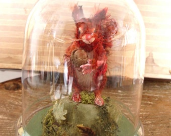 Red squirrel **RESERVED**