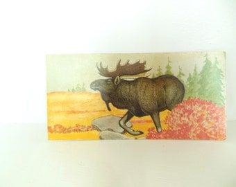 Vintage Mammal Flash Card Color Paper Ephemera Moose 60's (item 12)