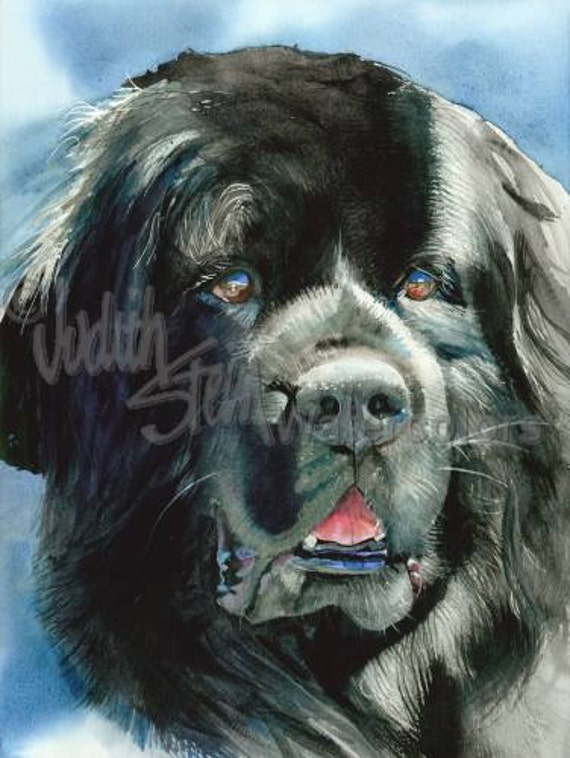 "Newfoundland, AKC Non Sporting, Pet Portrait Dog Art Watercolor Painting Print, Wall Art, Home Decor, ""What's Newfie"" Judith Stein k9stein"
