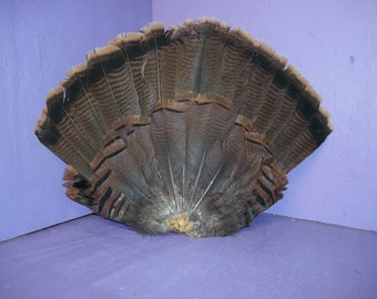 1 Real turkey tail fan feather bird game home decor pow wow craft good spurs part bronze wild man cave