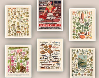 Kitchen art, kitchen decor, vegetables, mushrooms, mollusk educational poster, fishes, seaweeds, fishwife, kitchen decor, fishmonger, 11x14