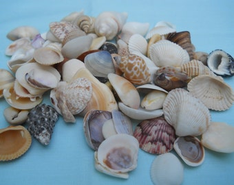 small mixed seashells NAUTICAL BEACH COASTAL decor crafts weddings