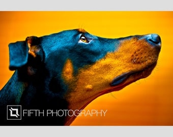 Doberman. Fine Art Giclée Canvas Wrap