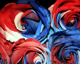 Paris Photography, French Country, Parisienne, Paris Postcard,Vintage Rose,Roses,French Home, Dorm Decor, Kitchen Art, Ruby Red, Blue,Color