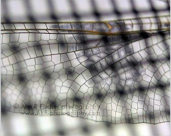 Dragonfly Wing Through Screen Photo, Animal Photography, Miksang Photography, Dragonfly Art, Metallic Print