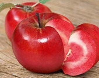 Organic Garcinia, Gluten Free, Vegan, Paleo, Diet Bars,  Acai Berry, 20 Yummy Flavors