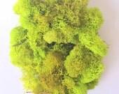 Reindeer Moss Chartreuse 1 OZ Bag Small Bag