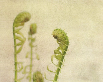 Fern Photography, Garden Wall Art, Green Photograph, Nature Picture, Plant Photo, Square Photo, Rustic Spring Artwork