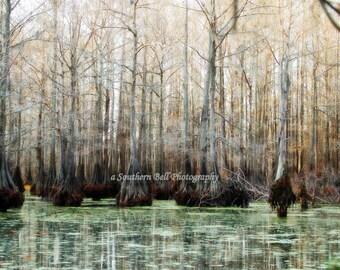 Lake Photograph Bayou Print Water Photography Red Moss 8x10 Trees Fall Trees Swamp Lake Photo Water Red Tree Louisiana Bayous and Swamps  9
