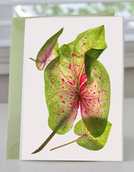 Handmade Greeting Card Calladium Float Blank