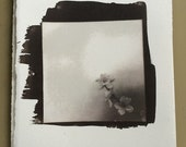 salt print photo of flowers