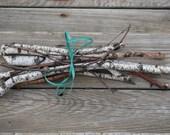 Birch Branches, Birch Limbs, White Birch Tree Branches, Birch Twigs, for Fairy Garden or a basket