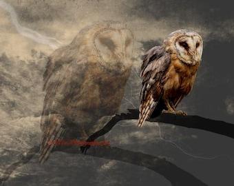 Bird Photography An Echo - Surreal Barn Owl Art Print A662 Bird Black Sepia neutral brown tan
