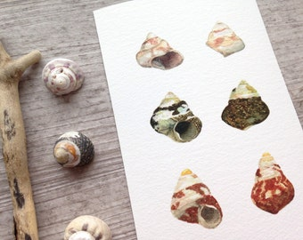 Collection of seashells - Print of a watercolor illustration - Seashells from Brittany - Archival giclee reproduction - 4x6 print