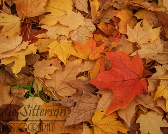Fall Leaf Pile, Leaf Collage, Fall Decor Photo Art, 8x10 photo, Framed Photography Option