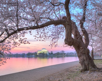 DC Cherry Blossom Photo - Washington DC Print - Cherry Blossom Festival - Jefferson Memorial - Washington DC Art, Sunrise