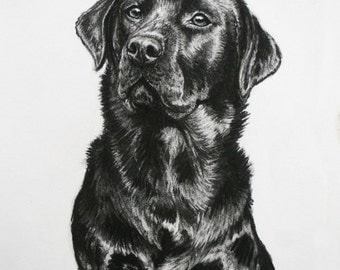 Black Labrador dog art dog print fine art Limited Edition print from an original charcoal drawing by H Irvine