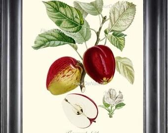 BOTANICAL FRUIT PRINT Poiteau 8x10 Botanical Art Print 25 Beautiful French Red Apple Blooming Flower Tree Antique Writing Wall Home Decor