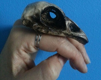 Oversized Resin cast pheasant skull ring