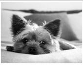 Yorkie Puppy Greeting Note Cards & Envelopes Set