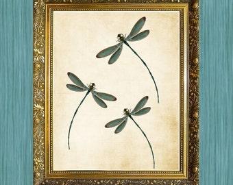 Buy 3 Get 1 FREE Dragaonflies Print a Hamilton House Prints Original Three Dragonflies