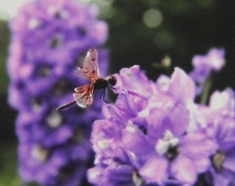 The Resting Place, Dragonfly on Purple Delphiniums, Art Photography