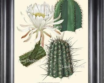 BOTANICAL PRINT CACTUS  Art Print 1 Beautiful White Flower Tropical Garden Nature Home Office Wall Decor