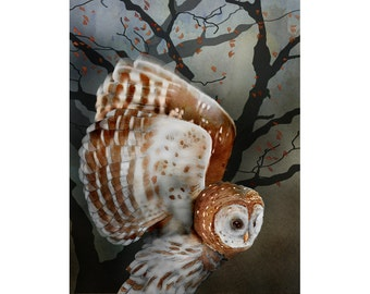 Barred Owl signed fine art print 9x12 Bird lover gift Nature
