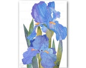 BLUE IRIS - Spring Floral Card  - Original Design by Linda Henry - Also available as a Print with a Free Mat or as an Art Block (CFLO201401)