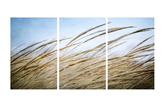 Swaying Grass at the Beach on a Windy Day. Nature Photography. Triptych Print by OneFrameStories.