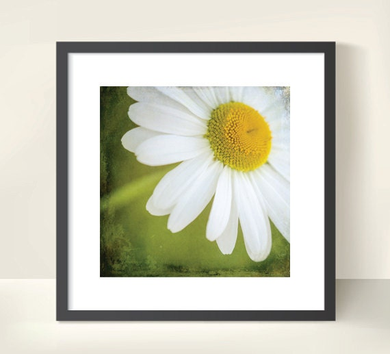 White Daisy. Spring Flower. Blossoms. Nature. Botanical Print by OneFrameStories.