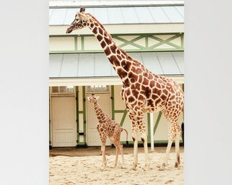 Giraffe Note Cards Set of 3, nature photography, custom cards