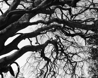 Black & White Art photography for digital download.