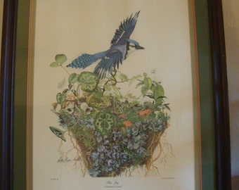 "Special Rare 1973 ""Blue Jay"" Bird Art Print Signed by Artist Sallie Ellington Middleton"