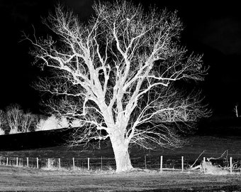 Landscape Photography- Nature Photography- Black and White Photography- Negative- Fine Art Photography- 8x12 Print